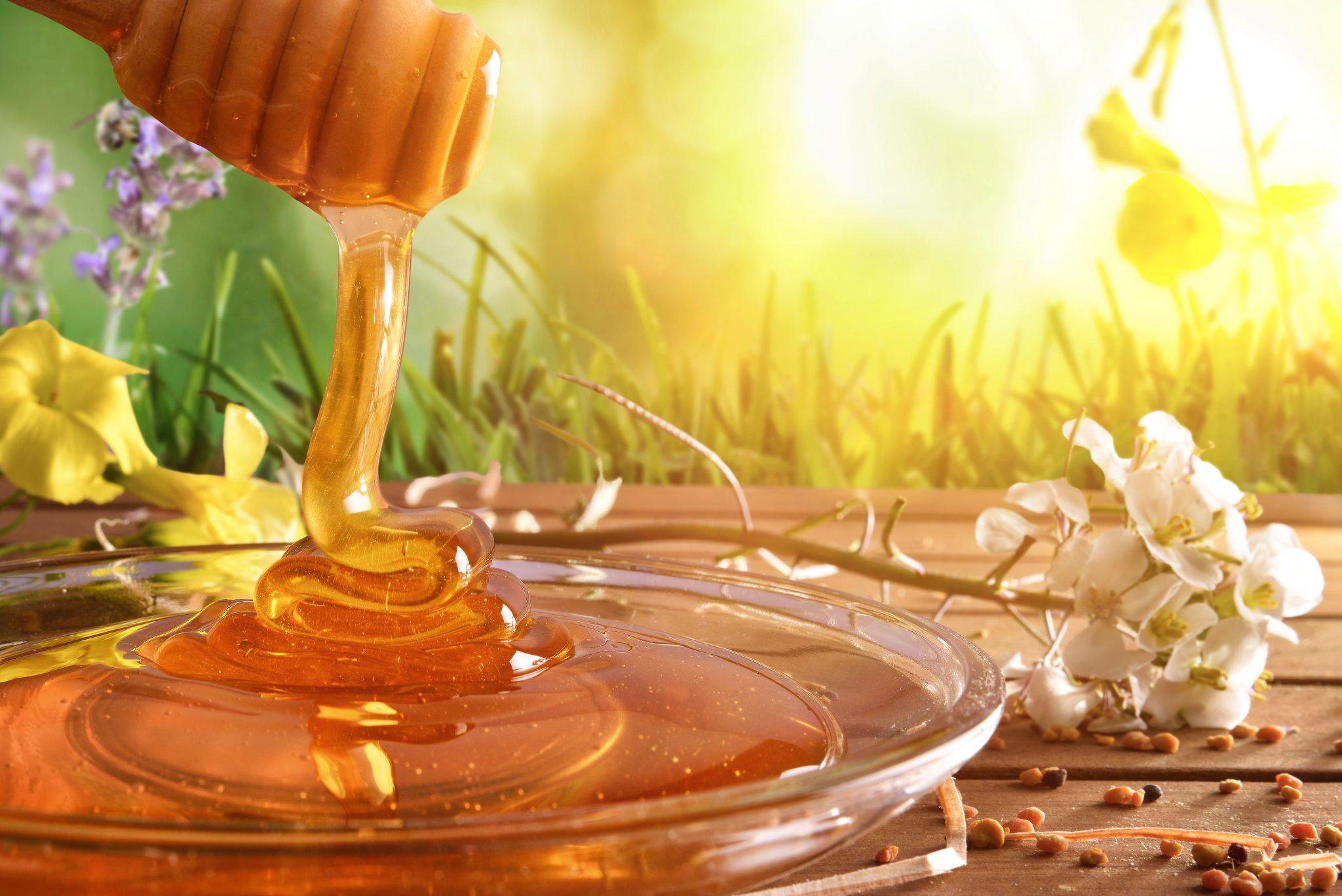 Основні характеристики та види меду різнотрав'я