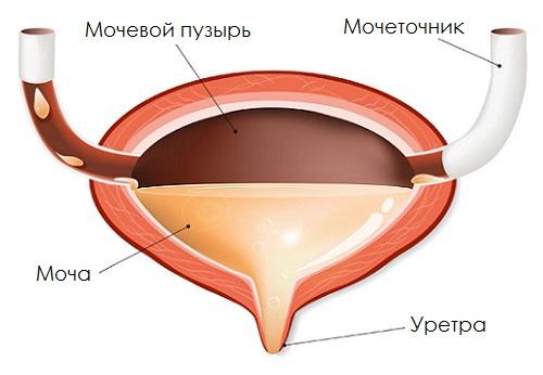 Уросептики при циститі у жінок, чоловіків, дітей): список препаратів
