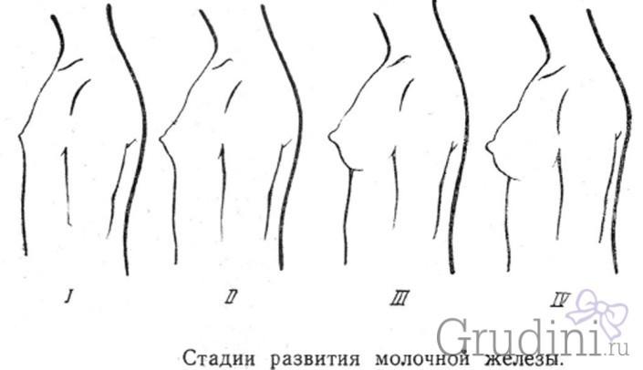 Груди дівчинки: ознаки та стадії зростання. Коли починає рости груди у дівчинки, в якому віці?