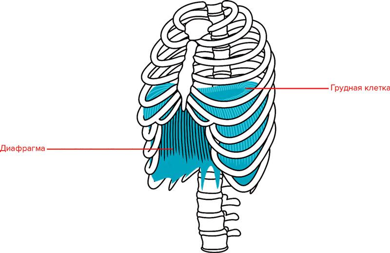 Пранаяма: дихання для здоров'я