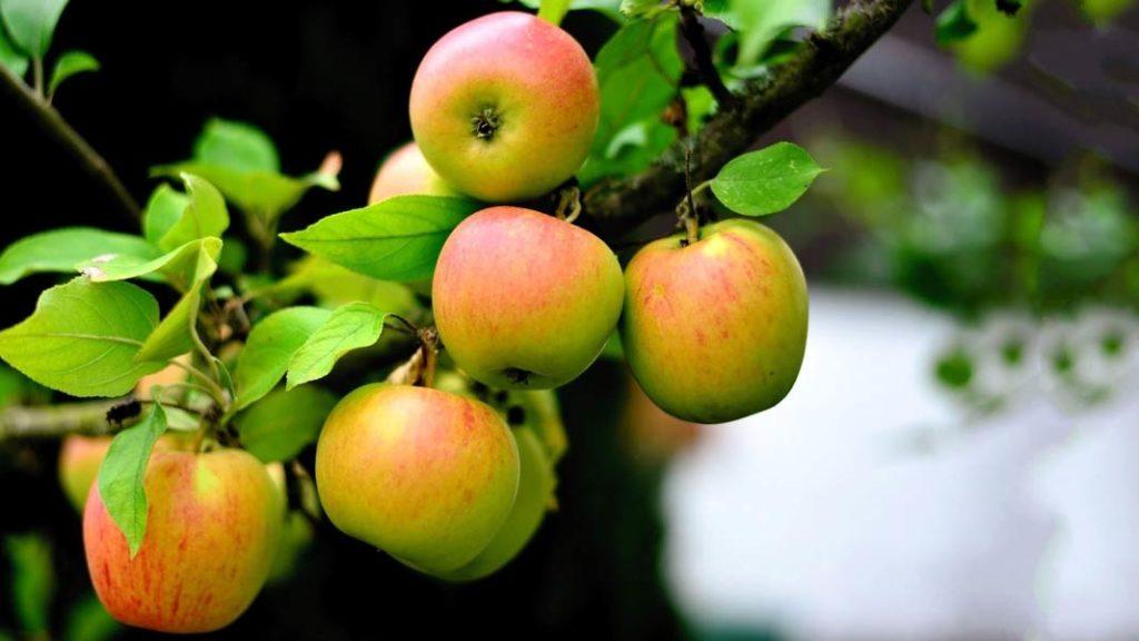 Сік домашніх яблук в догляді за обличчям + 5 масок