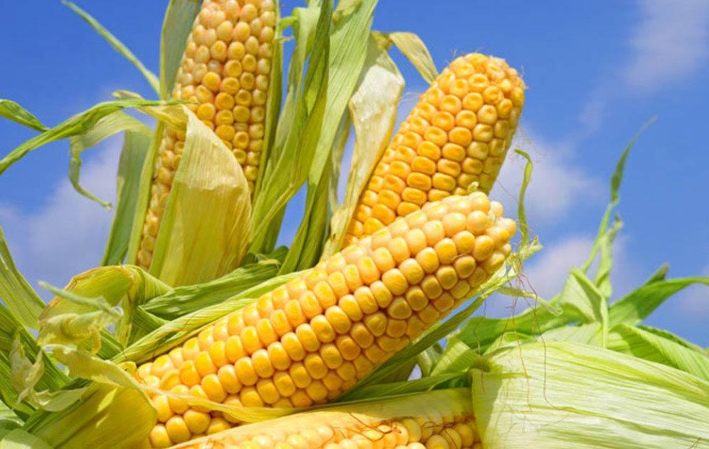 Свіжі кукурудзяні зерна в догляді за обличчям + 4 рецепта