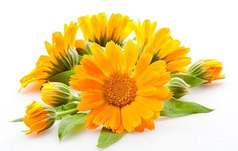 Топ 6 садових рослин для здоров'я шкіри, підкажемо коли садити